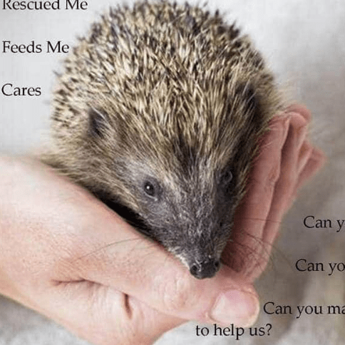 Helping Hands Hedgehog Rescue Hospital
