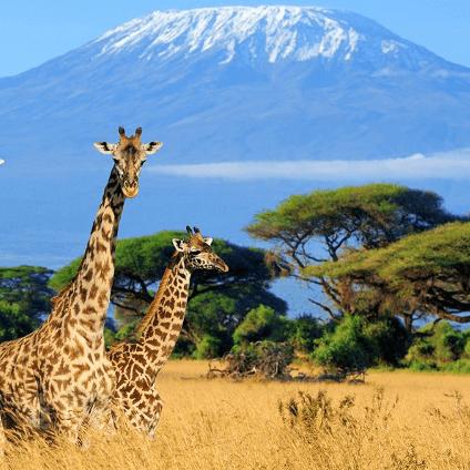 Tanzania 2021 - Alannah Enskat