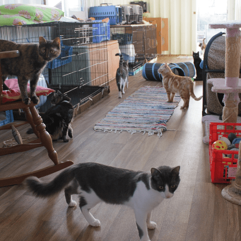 Ella's Blind Cat Sanctuary