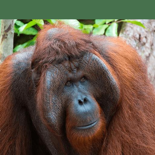 Borneo 2018 - Juliet Rylands