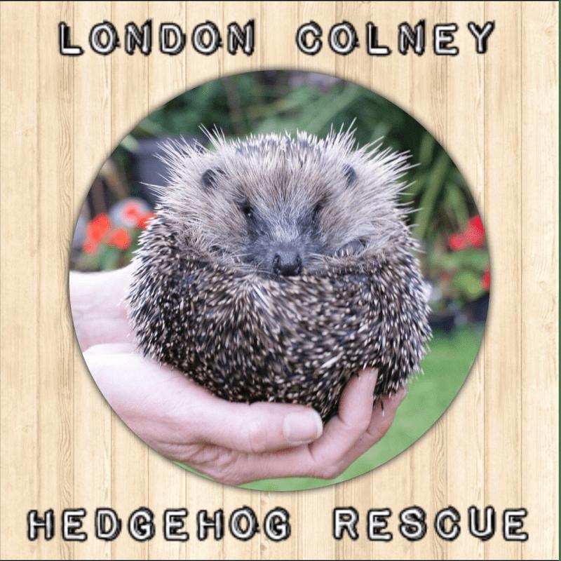 London Colney Hedgehog Rescue