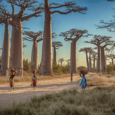 World Challenge Madagascar 2020 - Emma Willcocks cause logo