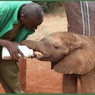 Zambia/Botswana 2020 - Savannah Day