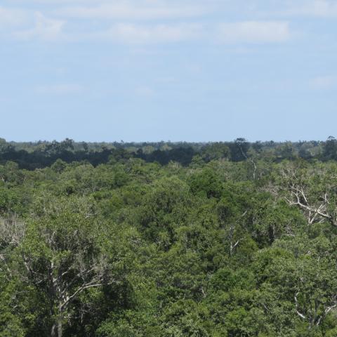 Borneo Nature Trust
