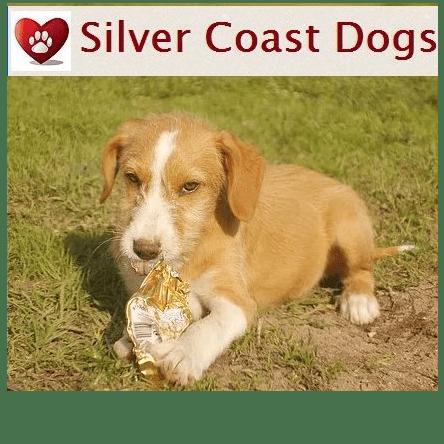 Silver Coast Dogs