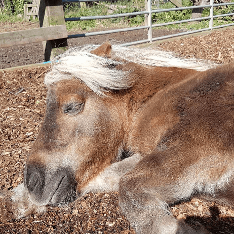Pagham Horse and Pony Sanctuary