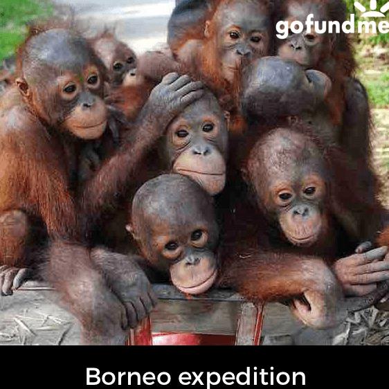 Borneo 2021 - Mia Gough