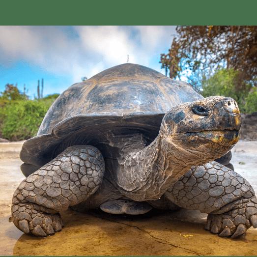 True Adventure Ecuador And The Galapagos Islands 2020 - Coopers School