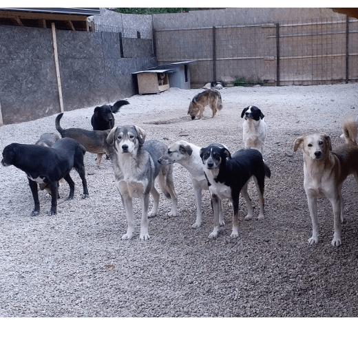 New Beginnings Animal Sanctuary