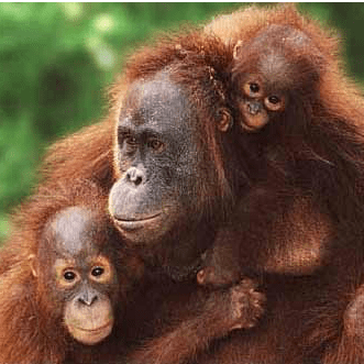 Borneo 2018 - Alys Jones
