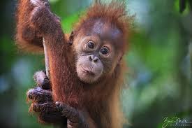 Borneo 2020 - Beth Lawler