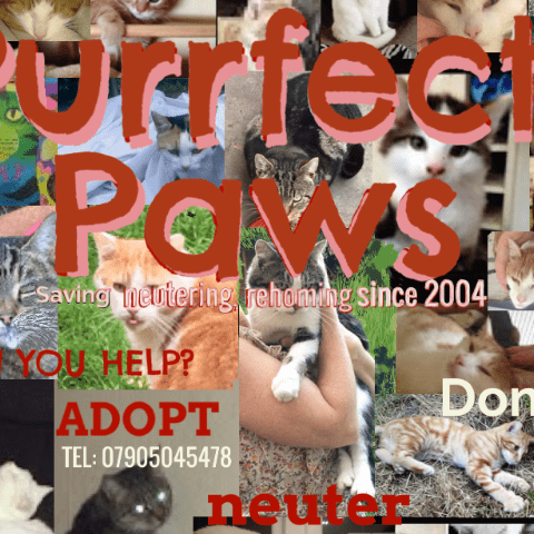 Purrfect PAWS Cat Rescue