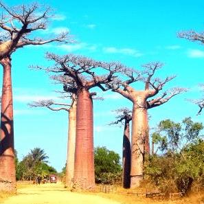 World challenge Madagascar 2019 - Tom Pope