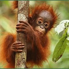 Borneo 2020 - Yansika Ignatius Selvaraj