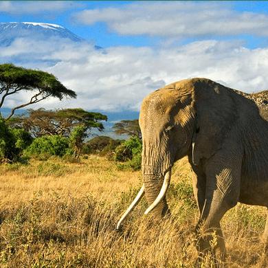 Kenya 2018 -  Theo Payne
