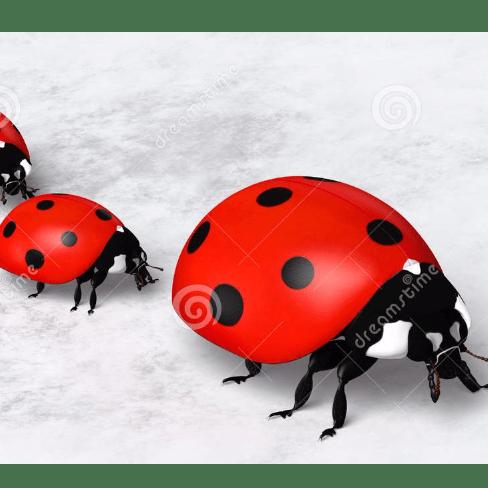 ladybirds preschool - Southampton
