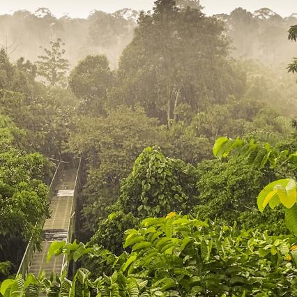 Borneo 2020 - Tara Brougham