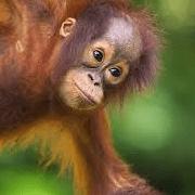 Borneo 2020 - Victoria Woodman