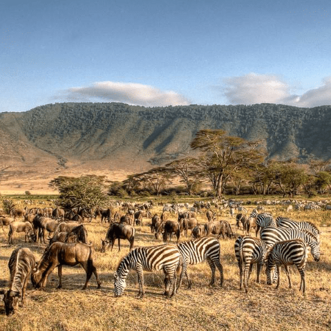 Tanzania 2020 - Jarrad Heath