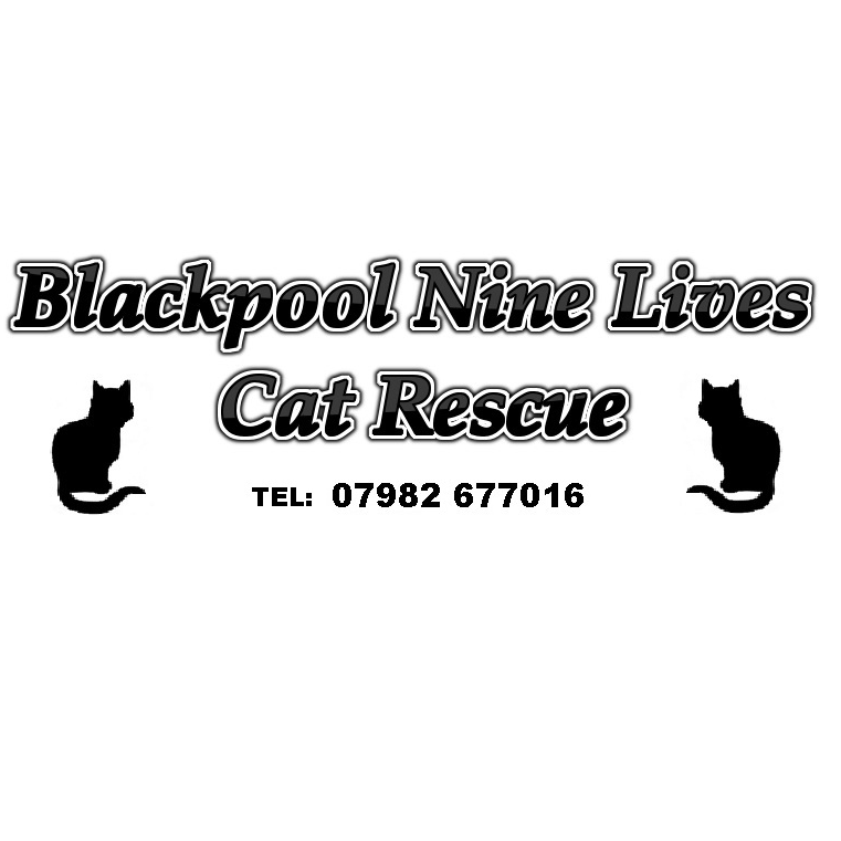 Blackpool Nine Lives Cat Rescue