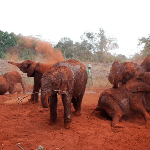 Camps International Kenya 2020 - Louie Rauso