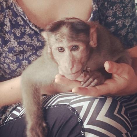 The Primate Trust