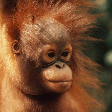 World Challenge Borneo 2020 - Robert Turner