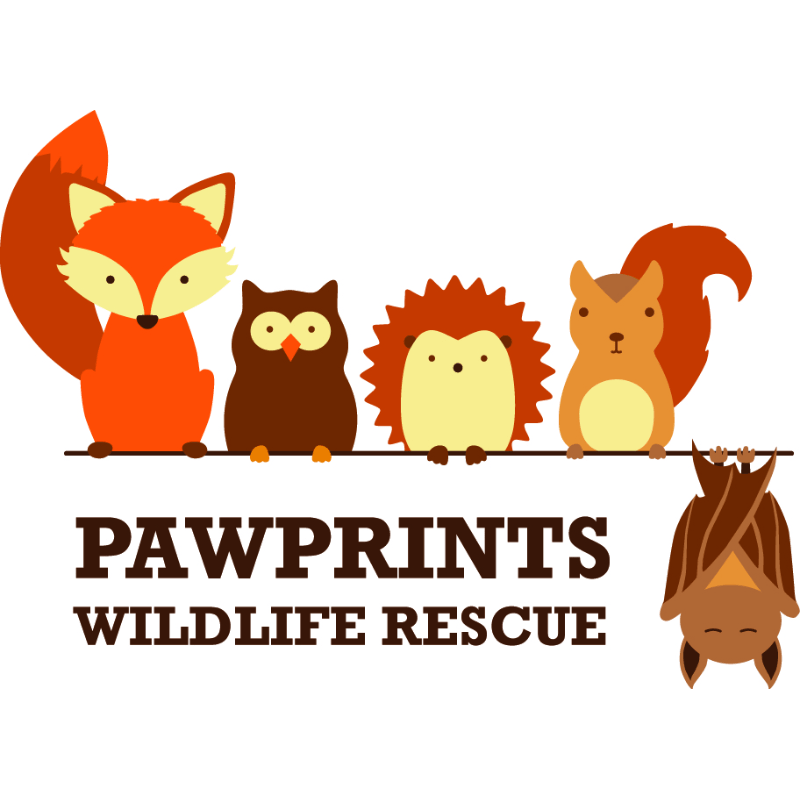 Pawprints Wildlife Rescue - Wirral