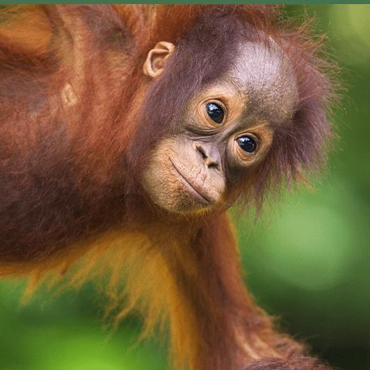 Camps International Borneo 2018 - S Nunn