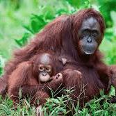 Camps International Borneo 2020 - Dan Aviss