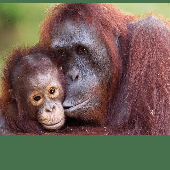World Challenge Malaysia and Borneo 2020 - George Patten