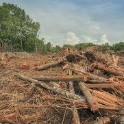 Borneo 2019 - Adam Hudson