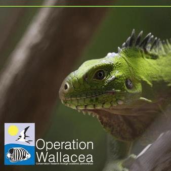 Operation Wallacea Dominica 2019 - Jack Robinson