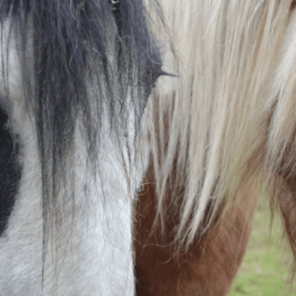 Heage Equine Rescue and Re-homing