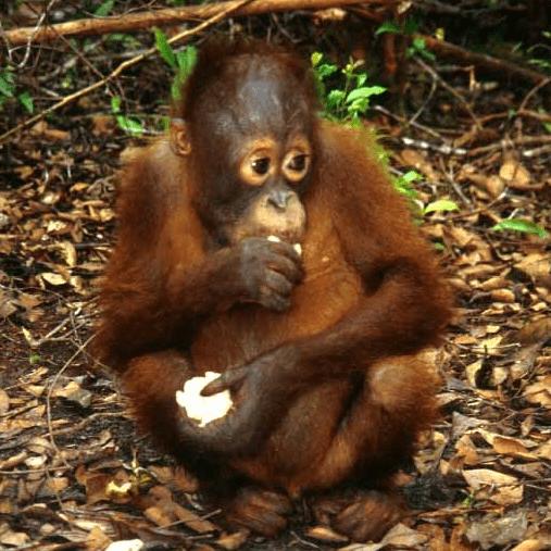 World Challenge Borneo 2021 - Harry Dignum