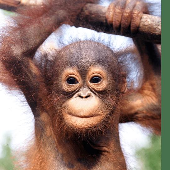 Borneo 2019 - Oliver Hovanessian