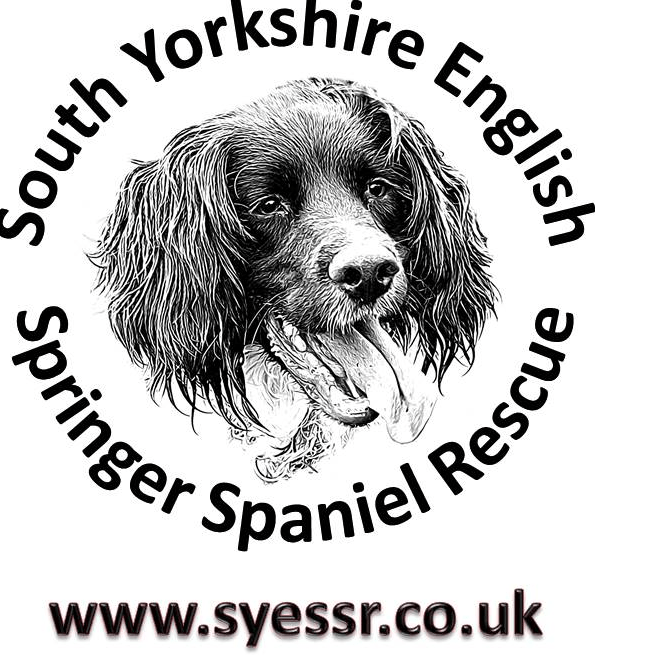 SYESSR - South Yorkshire English Springer Spaniel Rescue