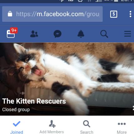 Loughborough Kitten Rescuers