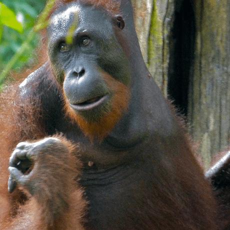 Borneo 2021 - Euan Walters