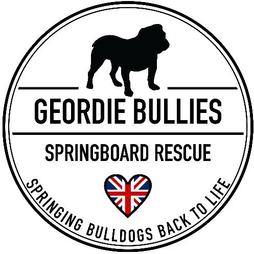 Geordie Bullies SprinGBoard