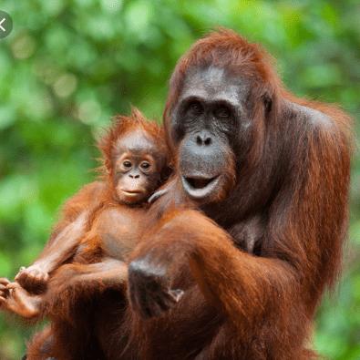 World Challenge Borneo 2020 - Martha Mitchell