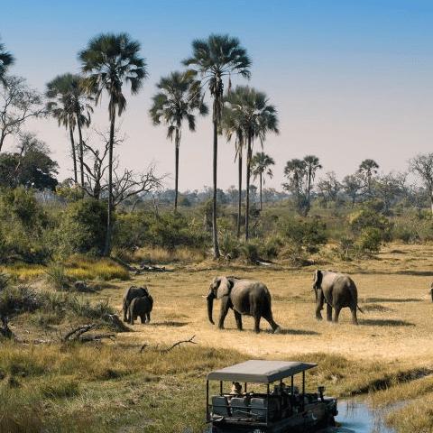 World Challenge Botswana 2020 - Amelia Martin