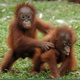 Camps International Borneo 2021 - Daisy Weston