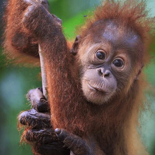 World Challenge Borneo 2020 - Eleanor Walmsley