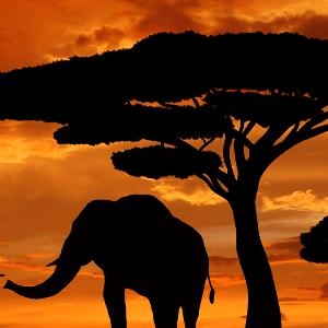 Namibia 2017 - Kian Darwell-Taylor