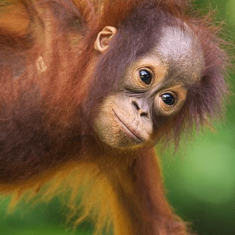 Borneo 2020 - Lola Brown