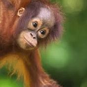 Borneo 2020 - Naomi Brown