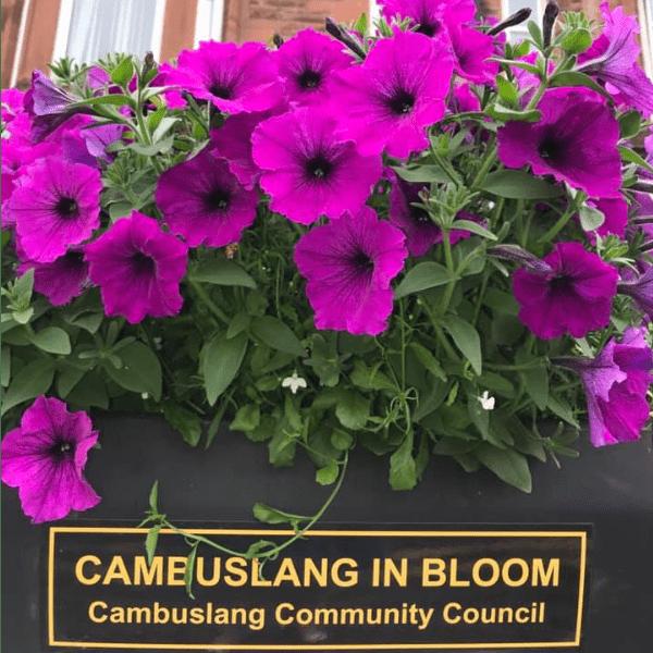 Cambuslang In Bloom