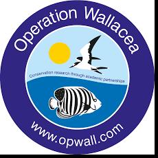Wallacea Operation 2021 - Masaya Hayashikawa