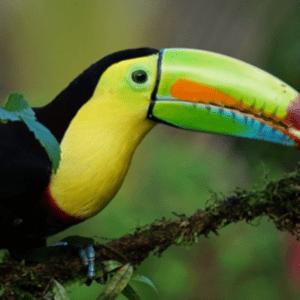 Costa Rica 2020 - Brooke Allett
